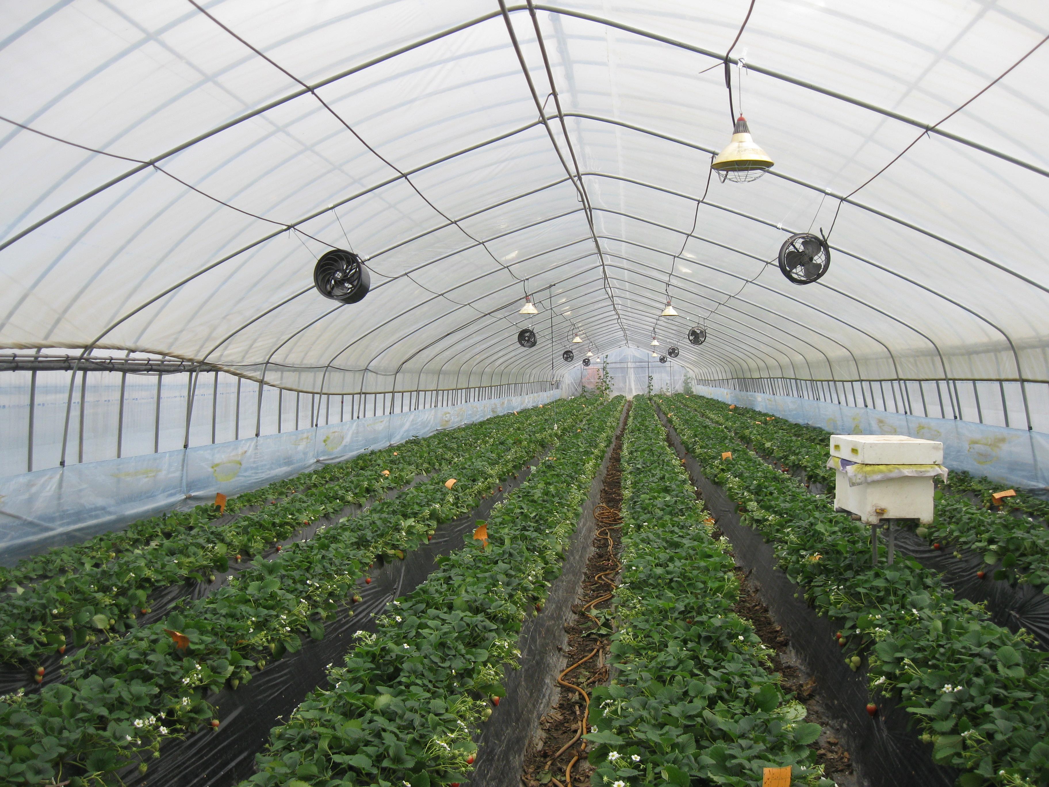세종시 딸기농장